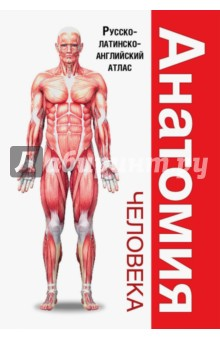 Анатомия человека. Русско-латинско-английский атлас курепина м анатомия человека атлас