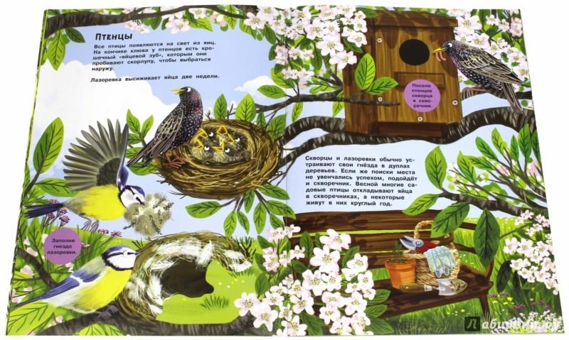 Иллюстрация 1 из 24 для В гости к природе. Малиновки, синицы и другие птицы | Лабиринт - книги. Источник: Лабиринт