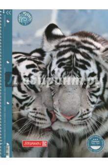 Тетрадь Tiger (80 листов, А4, линейка, на гребне, с перфорацией)
