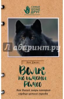 Волк по имени Ромео. Как дикий зверь покорил сердца целого города дикий волк