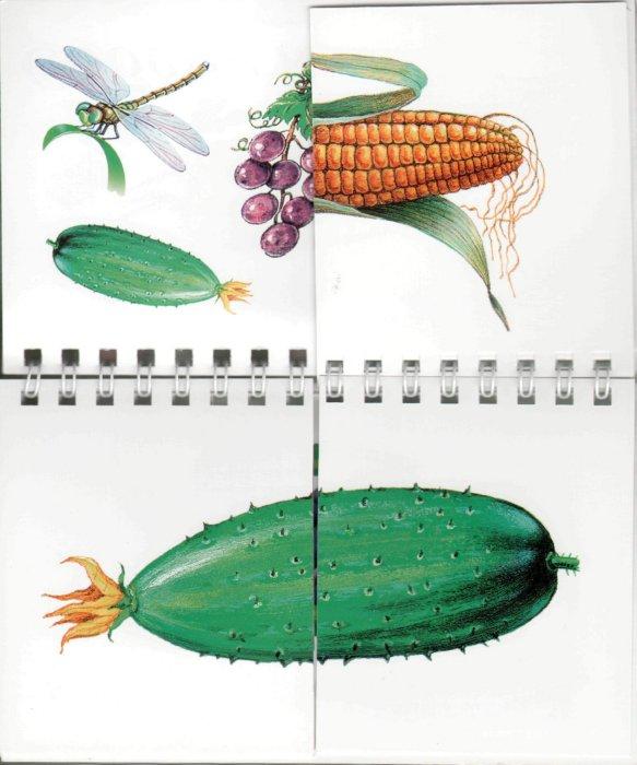 Иллюстрация 1 из 4 для Собери картинку | Лабиринт - книги. Источник: Лабиринт