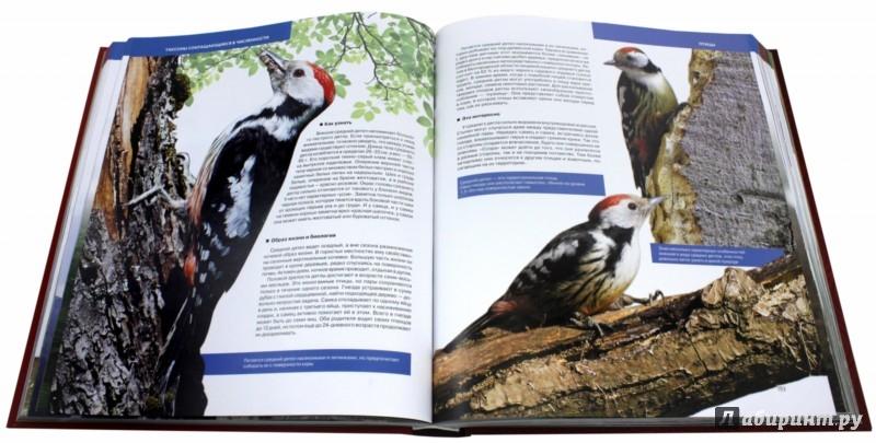 Иллюстрация 1 из 11 для Большая Красная книга (стерео-варио) 3D-обложка - Скалдина, Слиж | Лабиринт - книги. Источник: Лабиринт