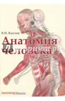 Анатомия человека. Учебник коммерческая логистика учебник для вузов стандарт третьего поколения