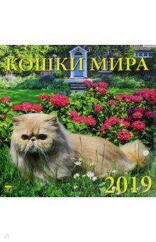 Календарь 2019 Кошки мира (70904)