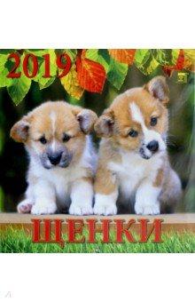 Zakazat.ru: Календарь 2019 Щенки (70906).