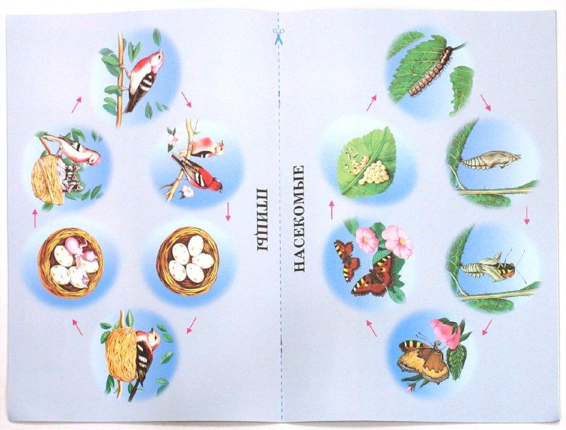Иллюстрация 1 из 4 для Жизненные циклы животных. Демонстрационный материал для дошкольных образовательных учреждений | Лабиринт - книги. Источник: Лабиринт