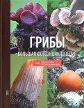 Грибы. Большая фотоэнциклопедия