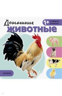 Купить Домашние животные, АСТ. Малыш 0+, Знакомство с миром вокруг нас