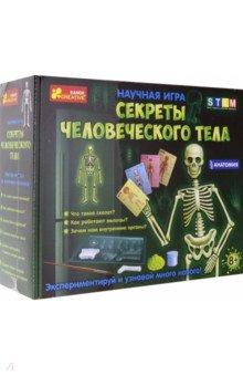 Купить Набор Анатомия. Скелет человека (12115017Р), Ранок, Наборы для опытов