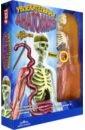 Обложка Увлекательная анатомия