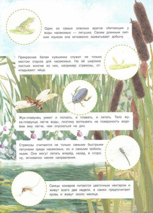 Иллюстрация 1 из 5 для Мир насекомых   Лабиринт - книги. Источник: Лабиринт