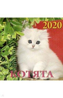 Zakazat.ru: Календарь 2020 Котята (70005).
