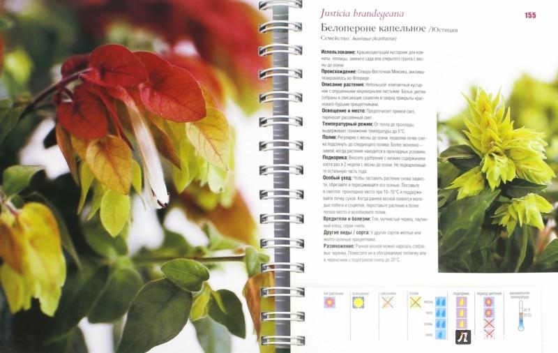 Иллюстрация 1 из 44 для Комнатные растения. Энциклопедия - Дорте Ниссен | Лабиринт - книги. Источник: Лабиринт