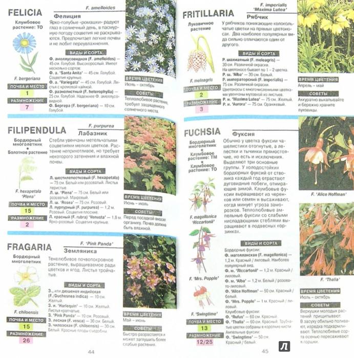 Иллюстрация 1 из 6 для Все о цветах в вашем саду - Дэвид Хессайон | Лабиринт - книги. Источник: Лабиринт