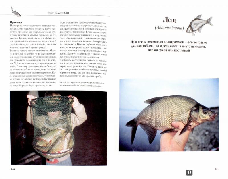 Иллюстрация 1 из 15 для Рыбалка. Тактика ловли - Колендович, Залевски | Лабиринт - книги. Источник: Лабиринт