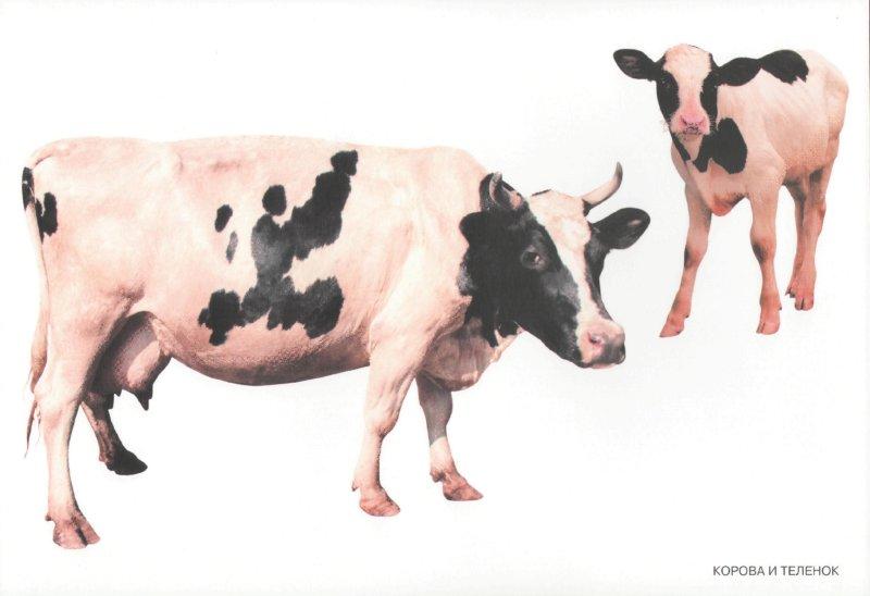 Иллюстрация 1 из 13 для Мир в картинках: Домашние животные | Лабиринт - книги. Источник: Лабиринт