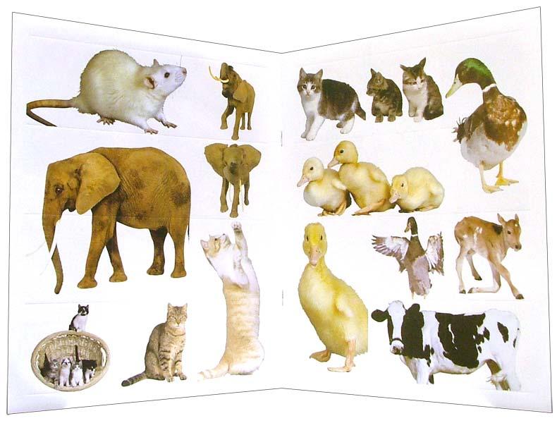 Иллюстрация 1 из 10 для Зверята. Наклей, напиши и раскрась (красная) | Лабиринт - книги. Источник: Лабиринт