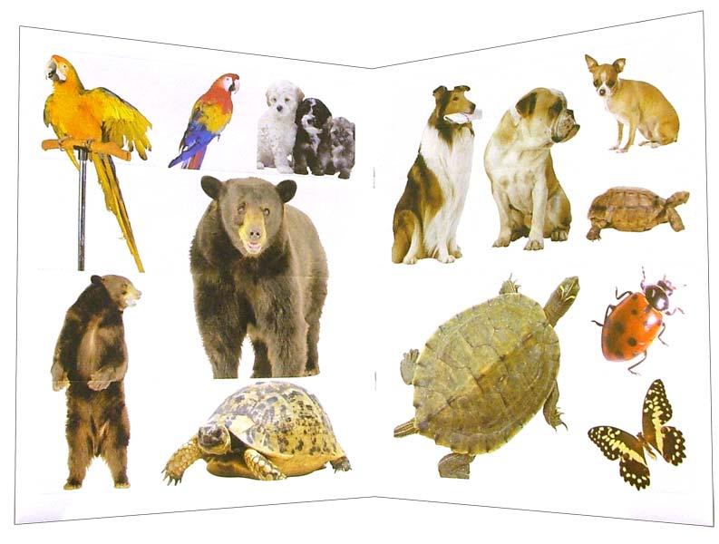Иллюстрация 1 из 10 для Зверята. Наклей, напиши и раскрась (зеленая) | Лабиринт - книги. Источник: Лабиринт