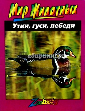 Утки, гуси, лебеди