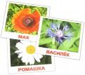 Носова, Епанова: Комплект карточек