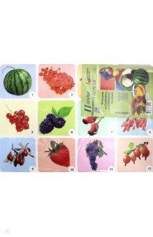 Комплект плакатов Плоды земли (4 плаката: Фрукты, Ягоды, Овощи, Грибы) ФГОС ДО