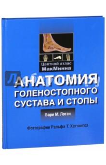 Анатомия голеностопного сустава и стопы - Бари Логан
