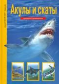 Ю.А. Дунаева: Акулы и скаты