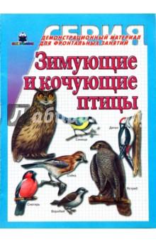 Зимующие и кочующие птицы