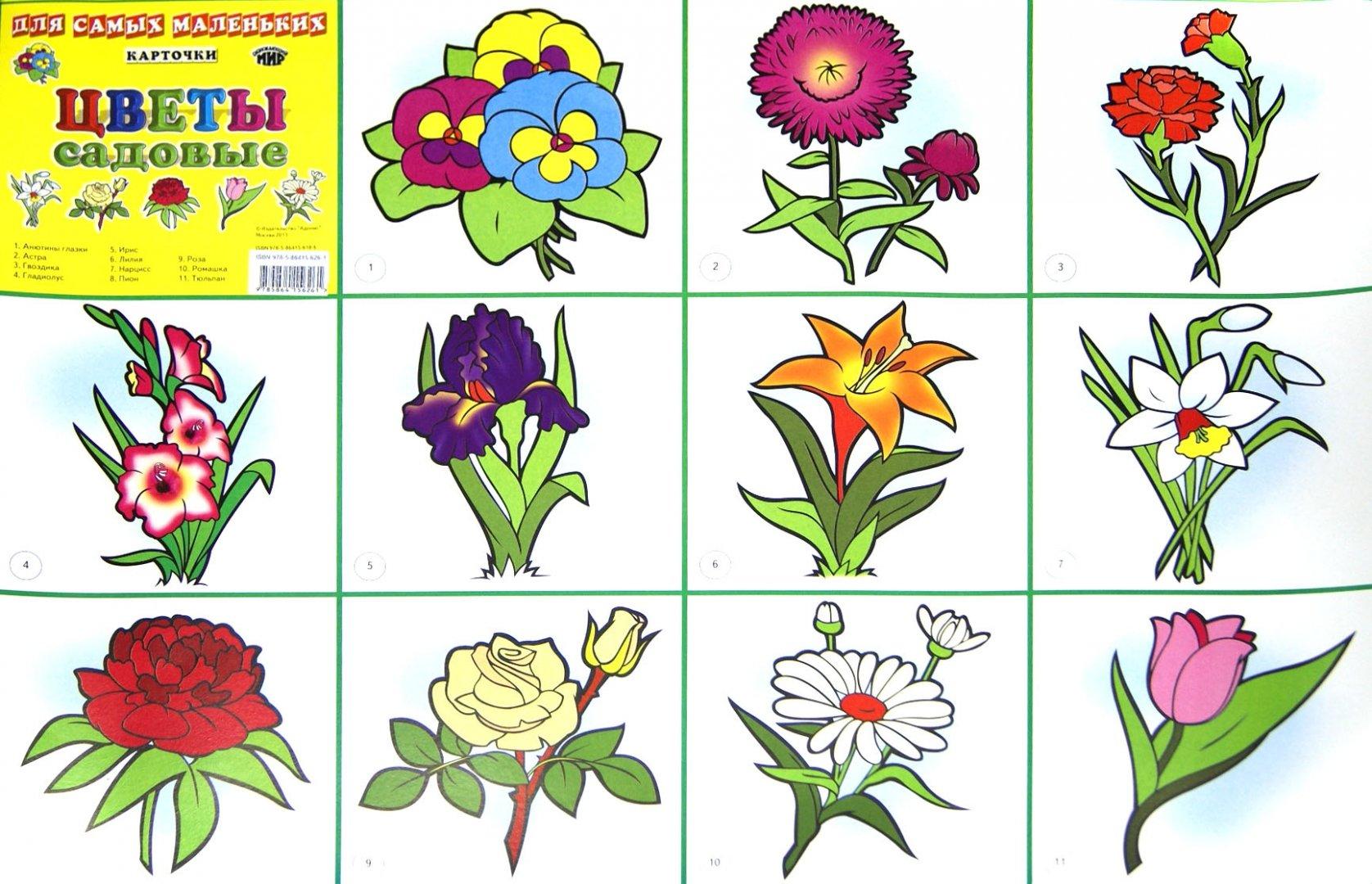 Мультяшных девочек, садовые цветы картинки с названиями для детей