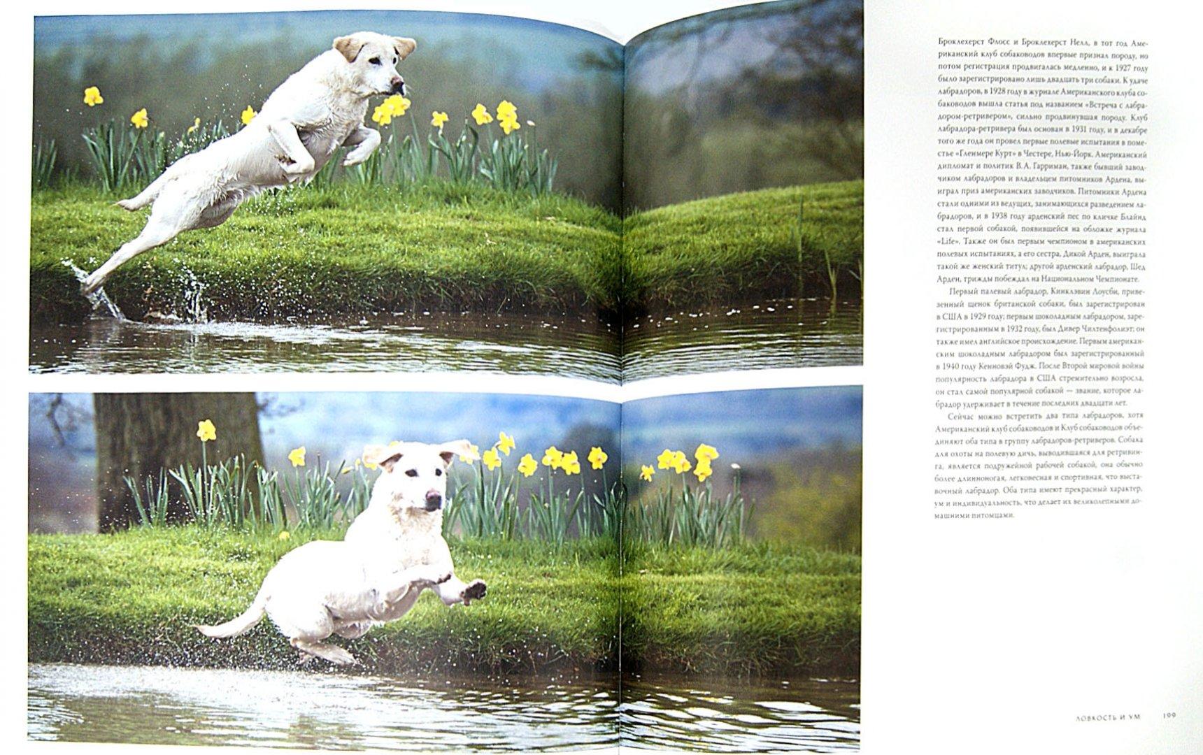 Иллюстрация 1 из 40 для Собаки. Иллюстрированная энциклопедия - Тамсин Пикерел | Лабиринт - книги. Источник: Лабиринт