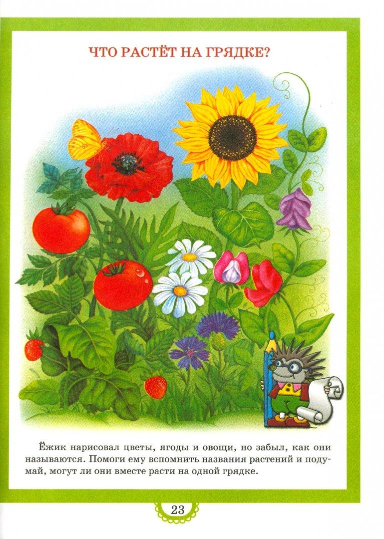 Иллюстрация 1 из 9 для Времена года | Лабиринт - книги. Источник: Лабиринт