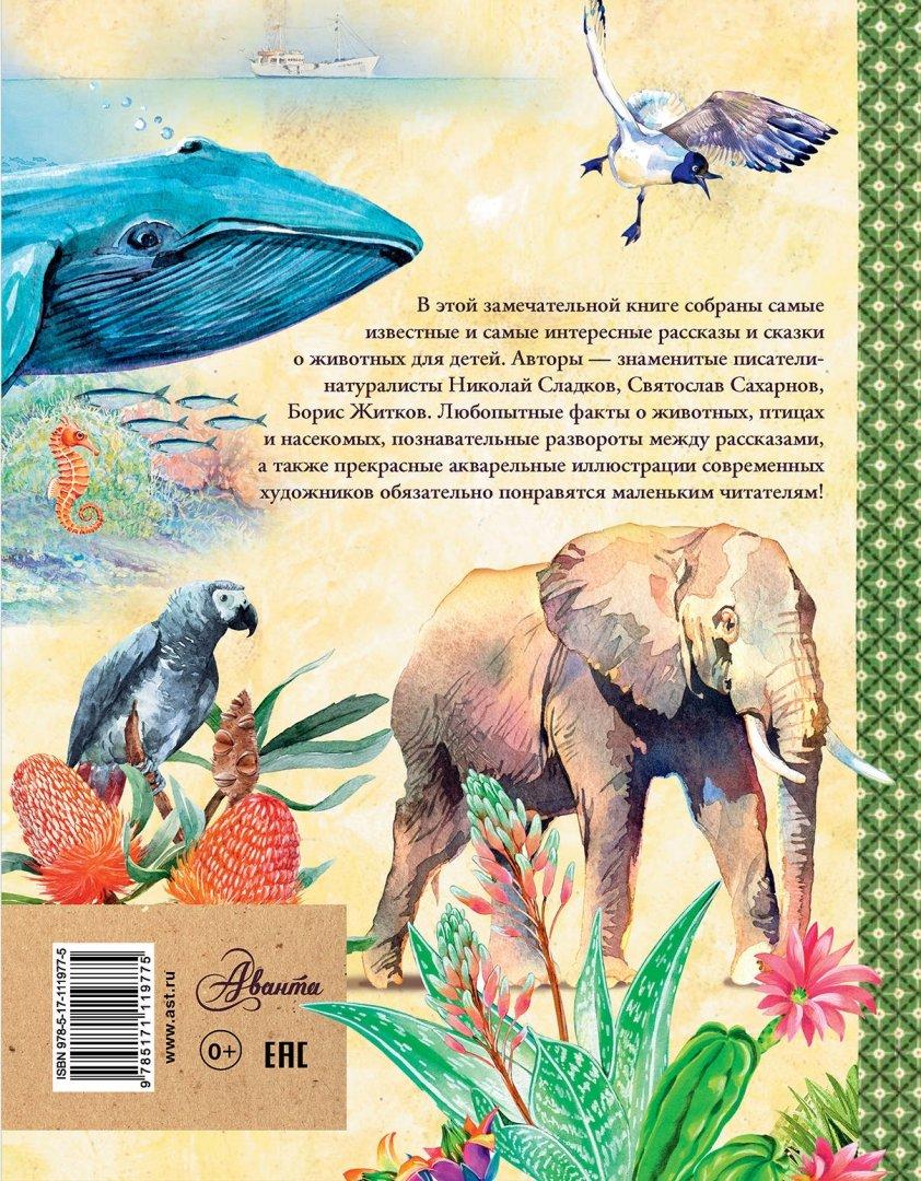 Картинки и иллюстрации с изображением жилища животных что средней