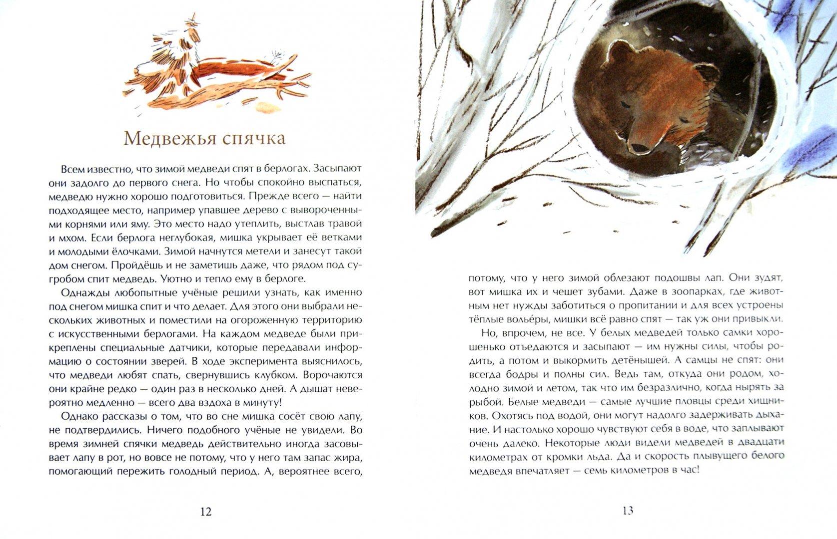 Иллюстрация 1 из 28 для Мишка. Самый русский зверь - Диана Лапшина | Лабиринт - книги. Источник: Лабиринт
