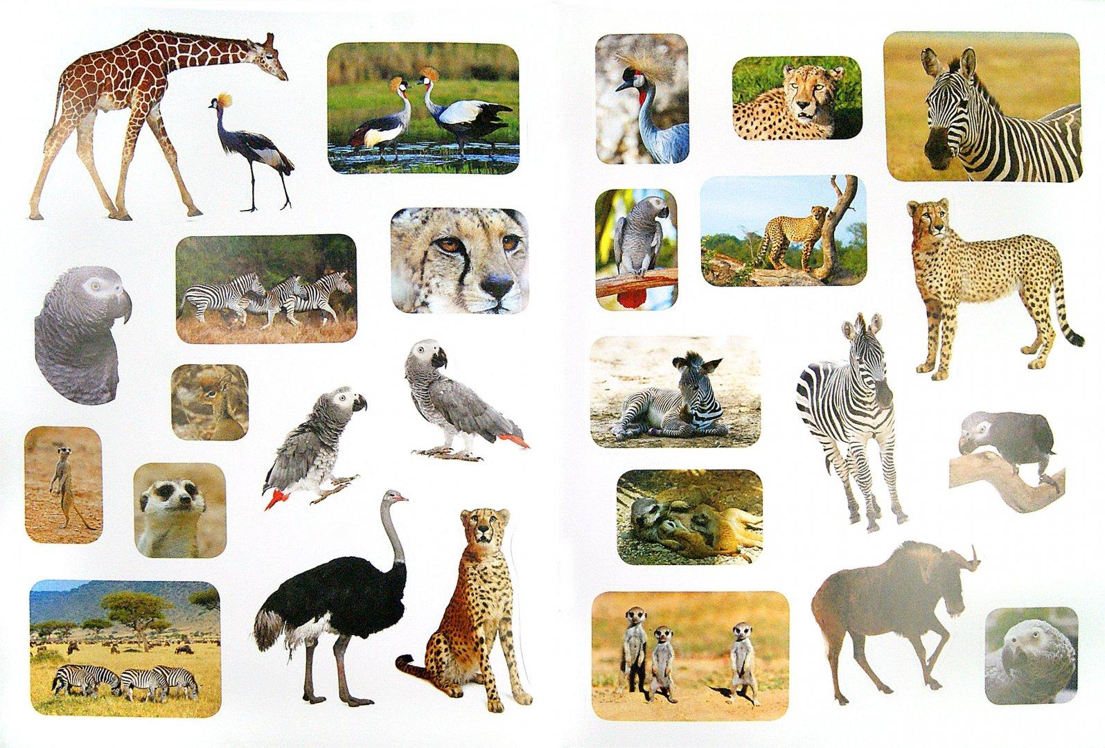 Животные африки картинки названия