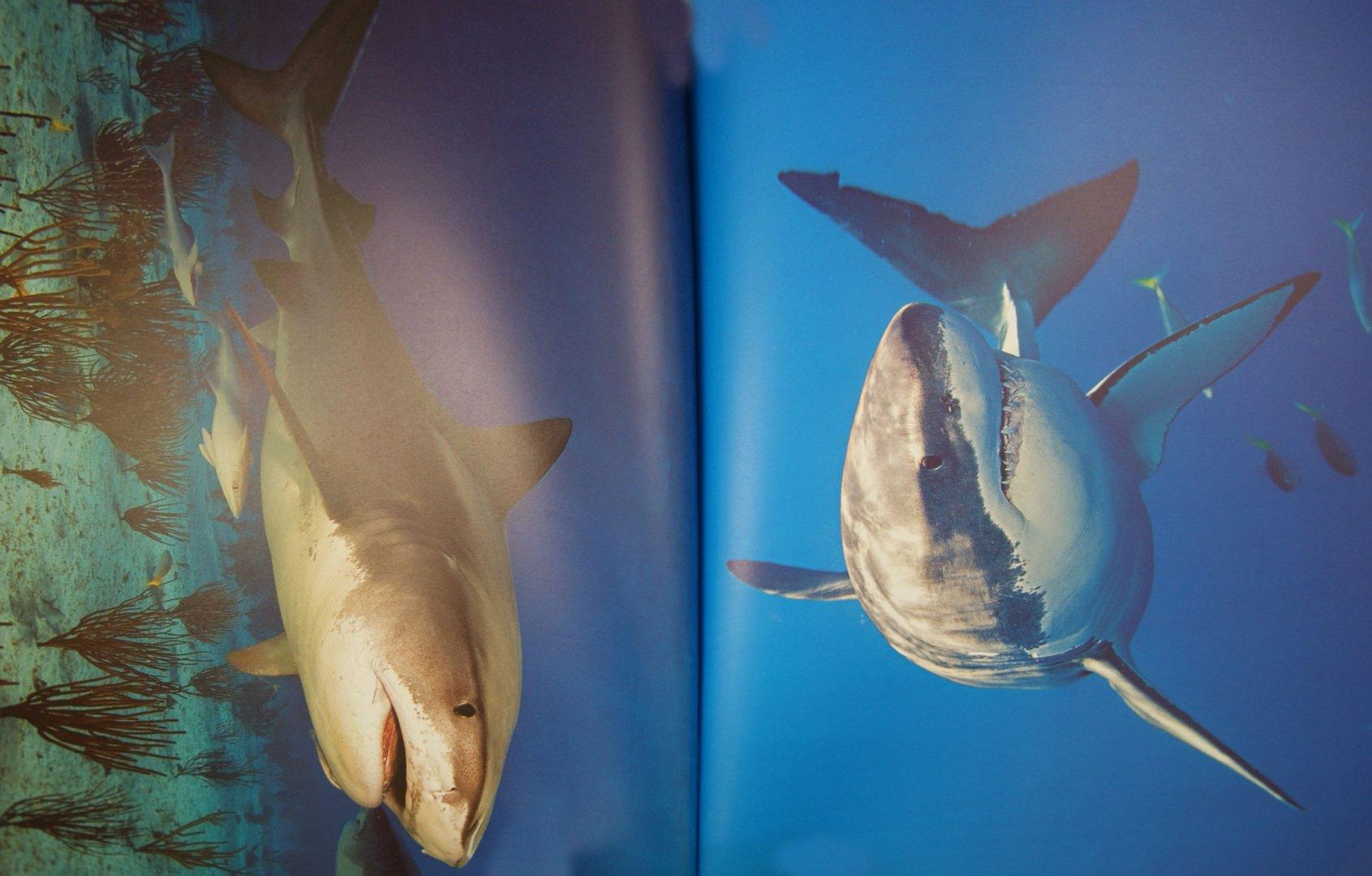 Иллюстрация 1 из 22 для Акулы - Эмма Сэл | Лабиринт - книги. Источник: Лабиринт