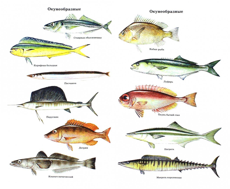 Животные антарктиды фото с названиями и описанием еще