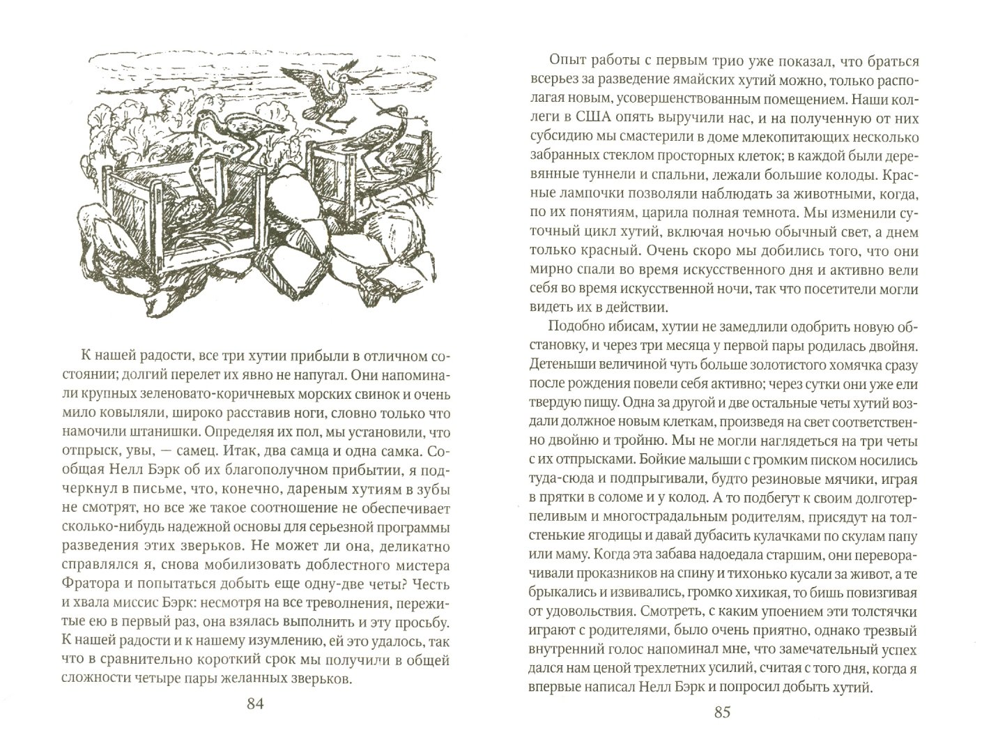 Иллюстрация 1 из 49 для Ковчег на острове - Джеральд Даррелл | Лабиринт - книги. Источник: Лабиринт