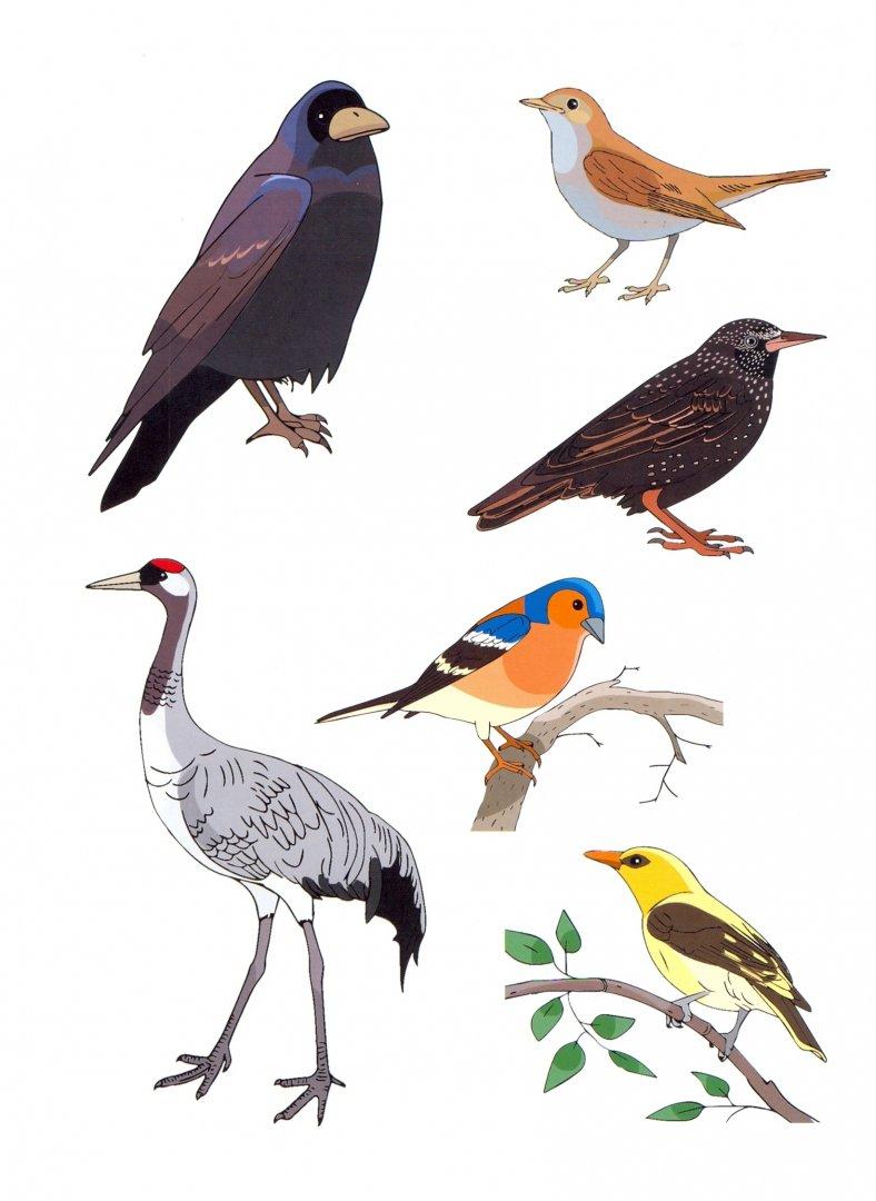 птицы демонстрационный материал пост там