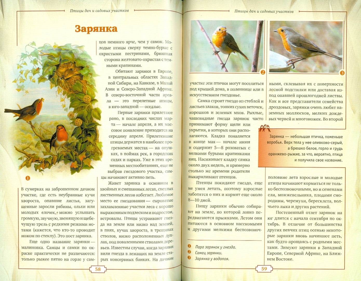 Иллюстрация 1 из 5 для Птицы дач и садовых участков - Владимир Бабенко | Лабиринт - книги. Источник: Лабиринт