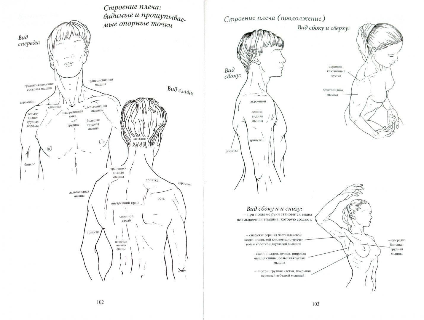 Иллюстрация 1 из 19 для Как работает тело. Позвоночник, суставы и мышцы - Бландин Кале-Жермен | Лабиринт - книги. Источник: Лабиринт