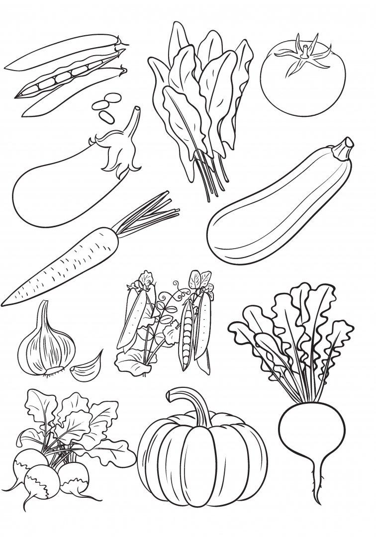 раскраска набор овощей поступления необходимо предоставить