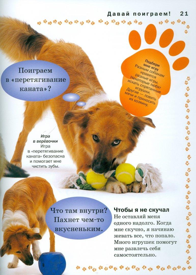 Иллюстрация 1 из 17 для Собака - Мэтью Рейнер | Лабиринт - книги. Источник: Лабиринт