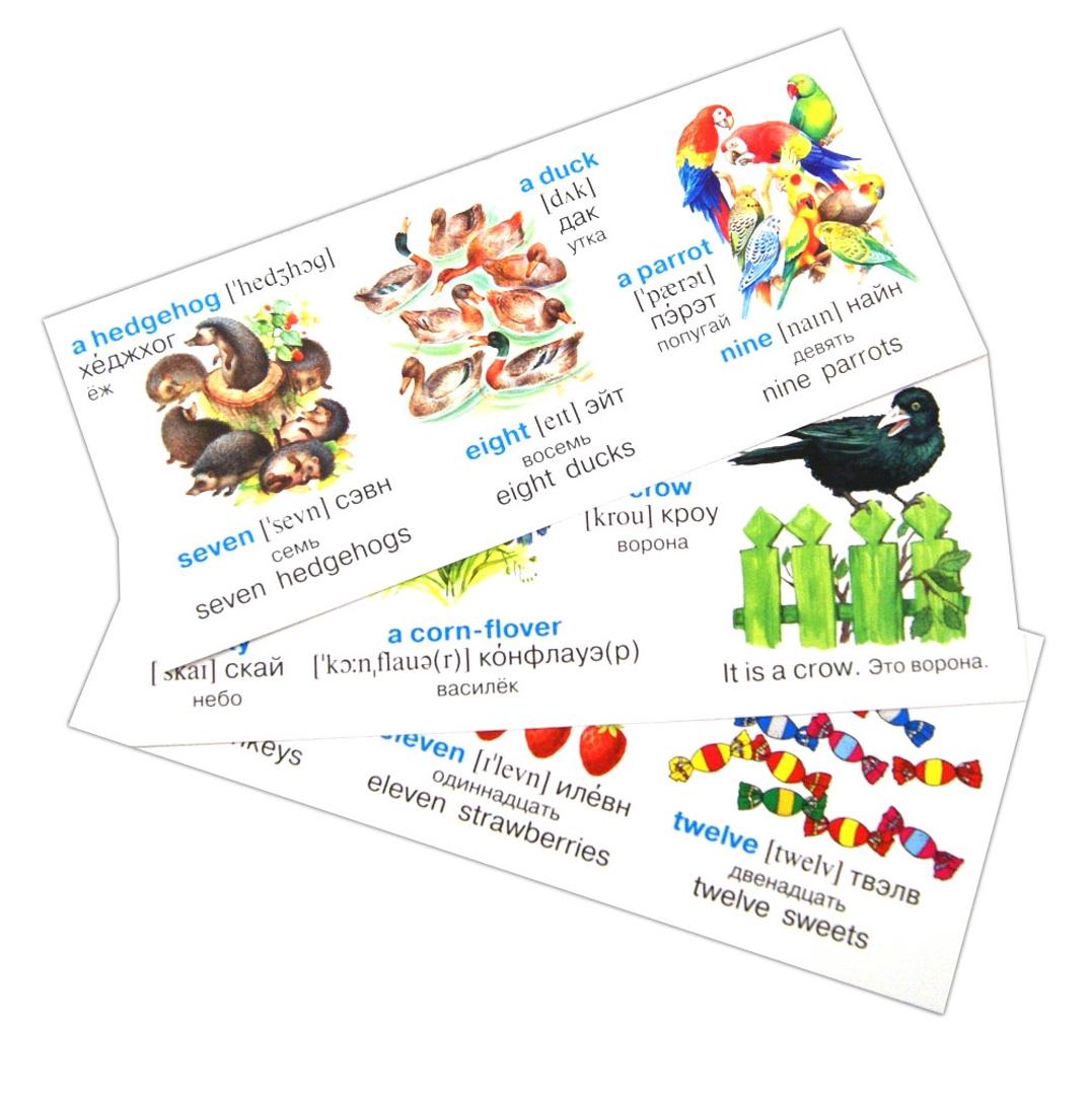 Иллюстрация 1 из 7 для Английский на карточках. Набор карточек | Лабиринт - книги. Источник: Лабиринт