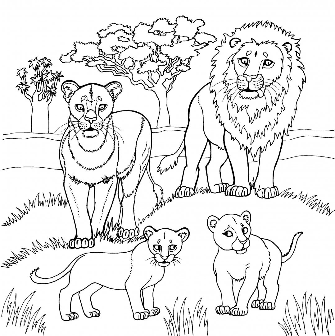 картинки для раскраски животные африки продюсер, один