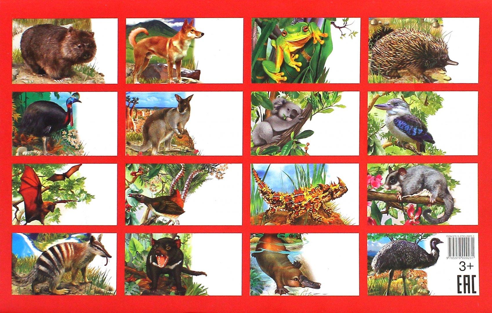 Картинки какие животные живут в австралии список