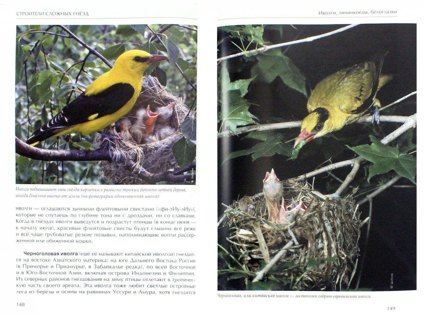 Иллюстрация 1 из 51 для Лесные птицы России - Константин Михайлов | Лабиринт - книги. Источник: Лабиринт