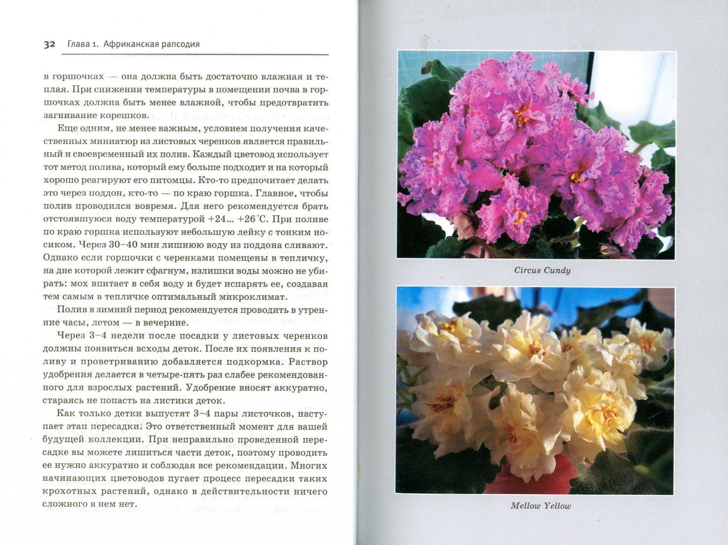 Иллюстрация 1 из 29 для Узамбарские фиалки. Выбираем, ухаживаем, наслаждаемся - Лариса Петровская   Лабиринт - книги. Источник: Лабиринт