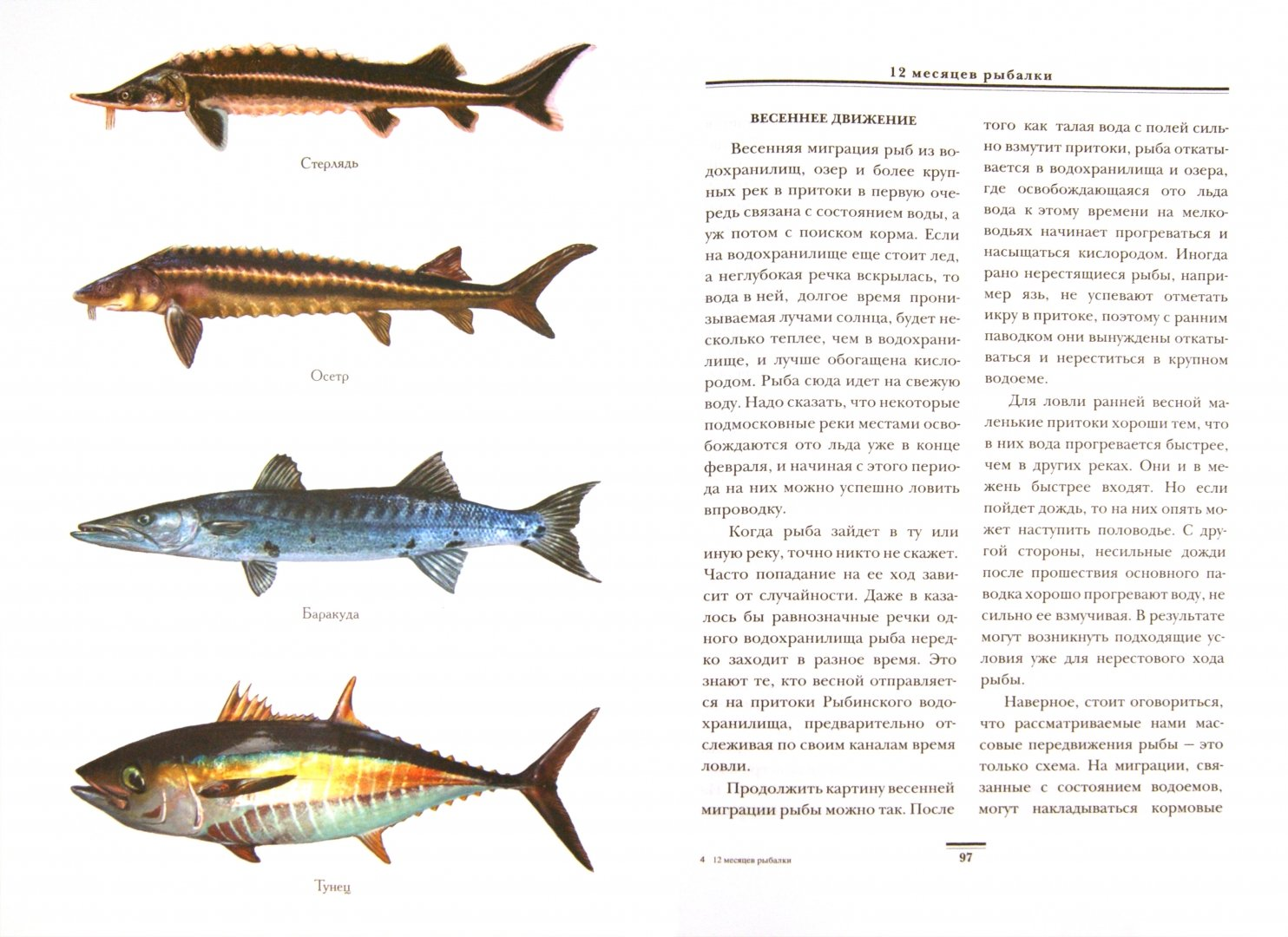 Иллюстрация 1 из 7 для 12 месяцев рыбалки - Алексей Горяйнов | Лабиринт - книги. Источник: Лабиринт