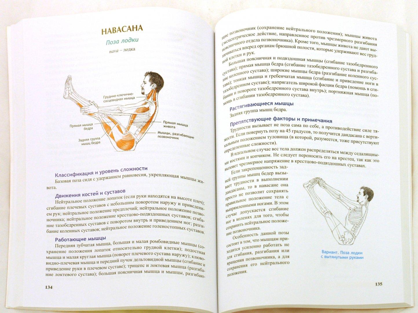 Иллюстрация 1 из 30 для Анатомия йоги - Лесли Каминофф   Лабиринт - книги. Источник: Лабиринт