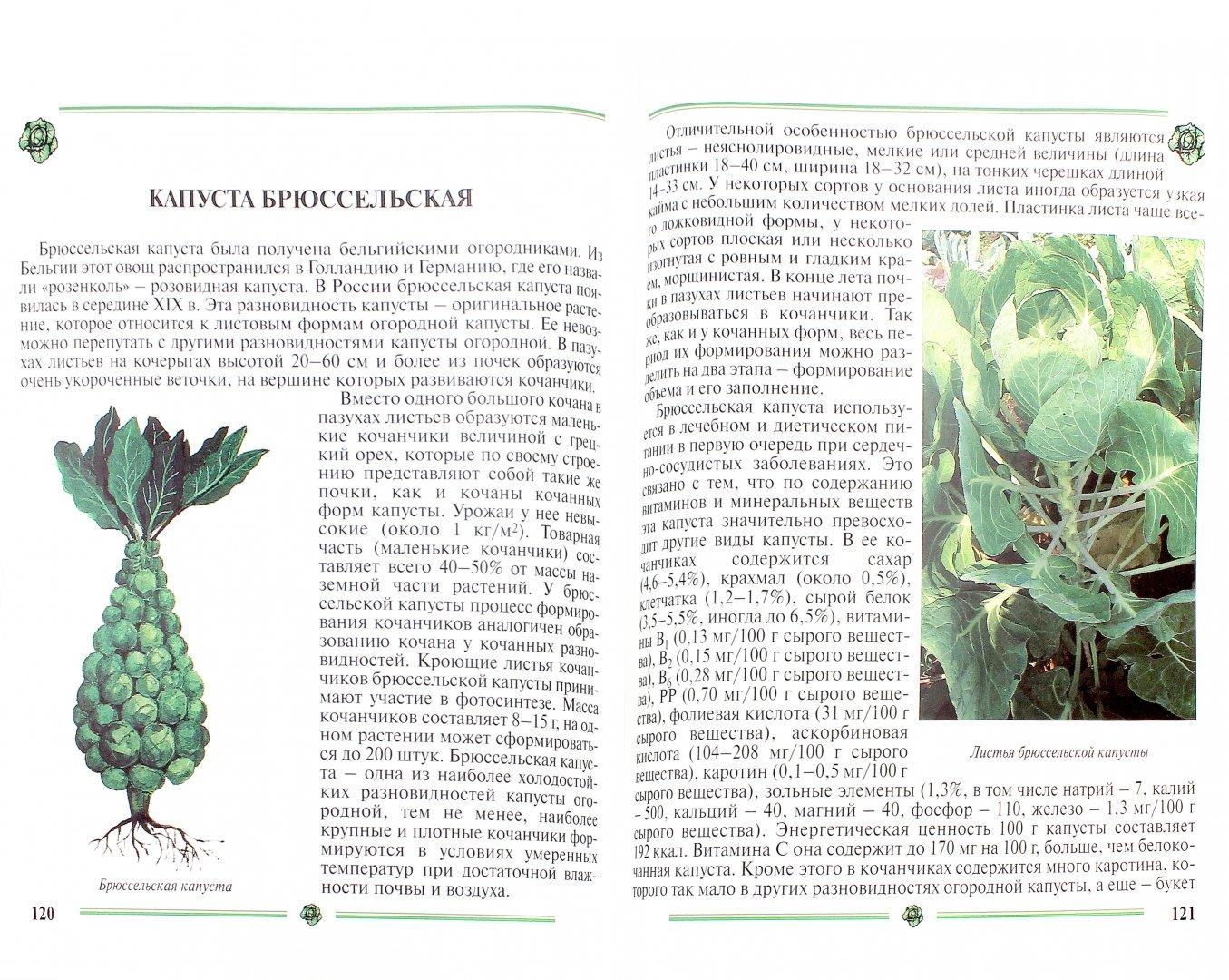 Иллюстрация 1 из 35 для Капуста. Пособие для садоводов-любителей - Пыльнева, Морозова | Лабиринт - книги. Источник: Лабиринт